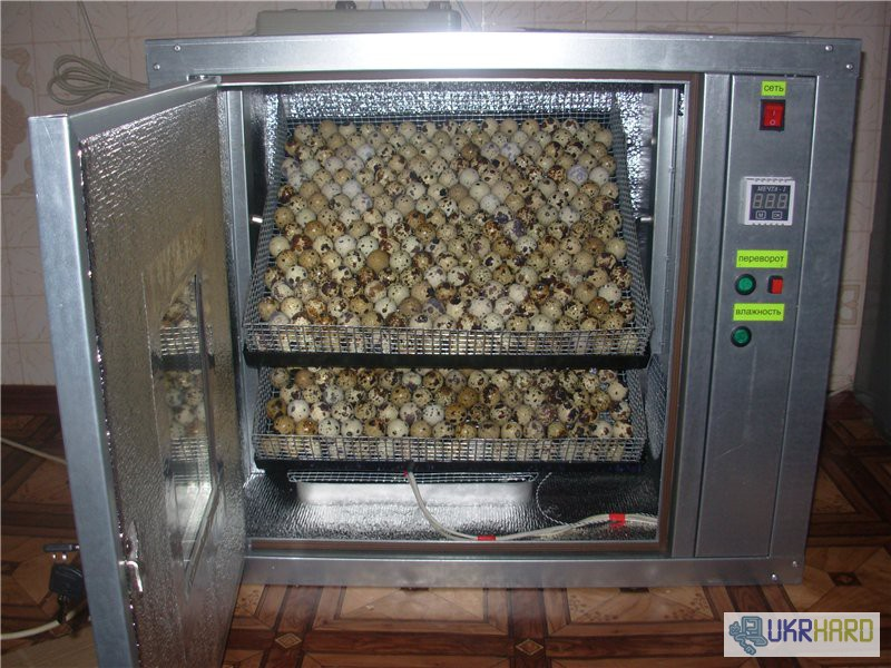 Инкубаторы для куриных яиц сделать своими руками 1023