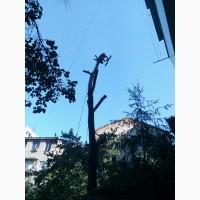 Спилим дерево любой сложности в Одессе. На 100% аккуратно