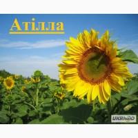 Акція!!! Продамо посівний матеріал соняшнику Аттіла