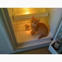 РЕМОНТ холодильников на дому у заказчика по Харькову