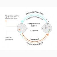 Поліпшення мікроциркуляції крові позитивно впливає на регенерацыю організму та імунітет